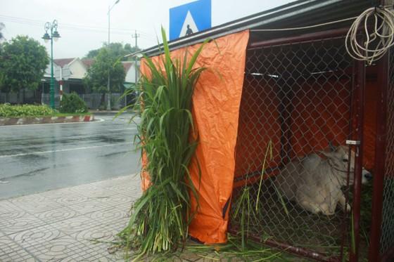 Hàng trăm hecta nông nghiệp và thủy sản tại Quảng Ngãi bị thiệt hại, lũ đang rút ảnh 4