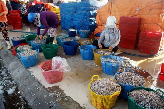 Sau bão số 6, ngư dân Quảng Ngãi tranh thủ đánh bắt ven bờ ảnh 2