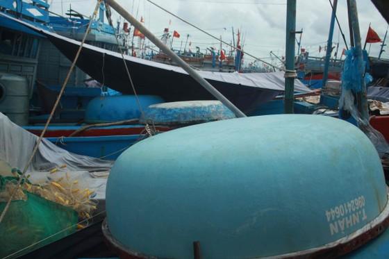 Quảng Ngãi khẩn trương neo trú tàu thuyền tránh trú bão số 9  ảnh 5