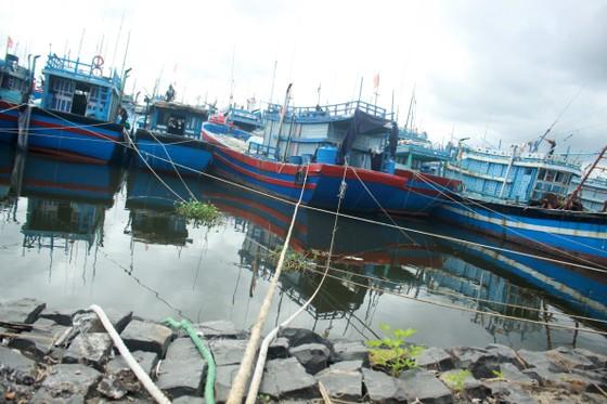 Quảng Ngãi khẩn trương neo trú tàu thuyền tránh trú bão số 9  ảnh 9