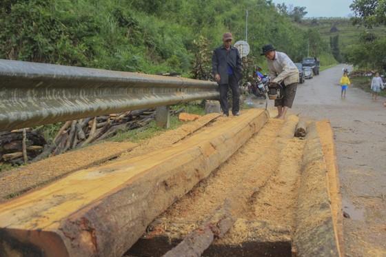 Quảng Ngãi: hàng chục khối gỗ theo lũ đổ về, người dân đổ xô đi vớt ảnh 7