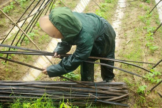 Quảng Ngãi: Nông dân đội mưa khôi phục vườn rau sau bão ảnh 9