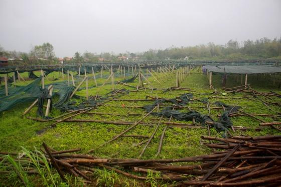 Quảng Ngãi: Nông dân đội mưa khôi phục vườn rau sau bão ảnh 3