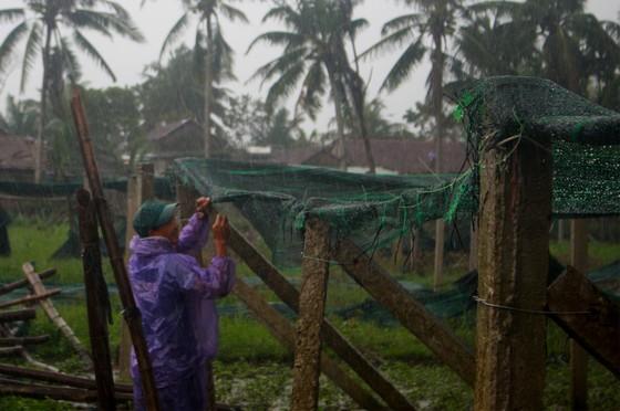 Quảng Ngãi: Nông dân đội mưa khôi phục vườn rau sau bão ảnh 7