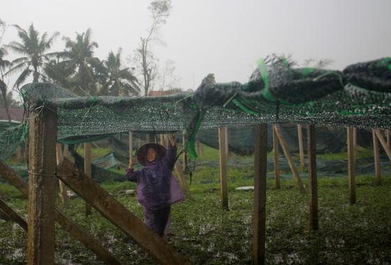 Quảng Ngãi: Nông dân đội mưa khôi phục vườn rau sau bão ảnh 6