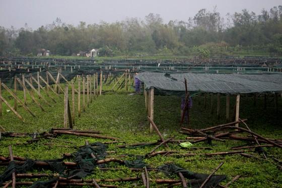 Quảng Ngãi: Nông dân đội mưa khôi phục vườn rau sau bão ảnh 4