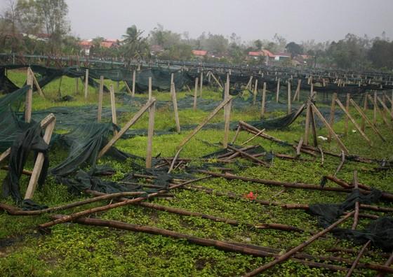 Quảng Ngãi: Nông dân đội mưa khôi phục vườn rau sau bão ảnh 2