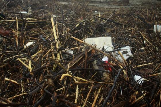 Củi khô bủa vây hơn 10km bờ biển Mỹ Khê, Quảng Ngãi ảnh 4
