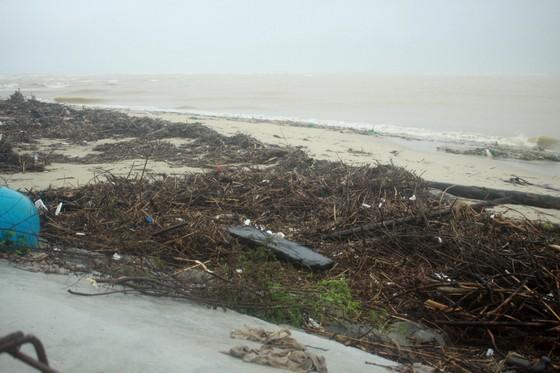 Củi khô bủa vây hơn 10km bờ biển Mỹ Khê, Quảng Ngãi ảnh 10