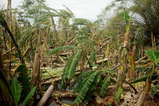 Xóm ốc đảo sông Trà Bồng khắc phục sau lũ ảnh 5