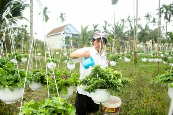 Quảng Ngãi: Rực rỡ 5.000 chậu hoa ngoại nhập của lão nông  ảnh 14