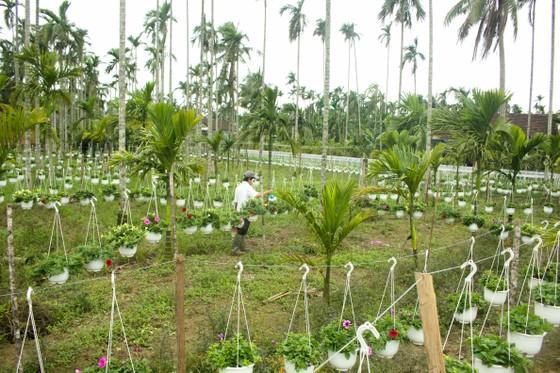 Quảng Ngãi: Rực rỡ 5.000 chậu hoa ngoại nhập của lão nông  ảnh 16