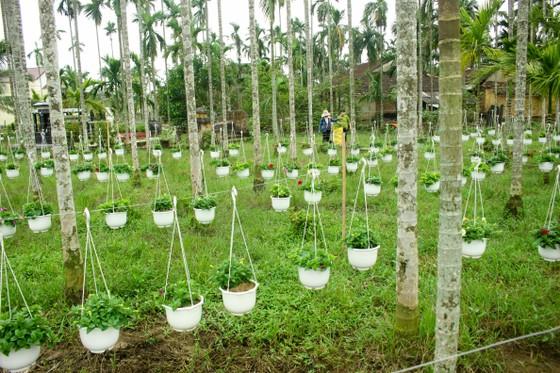 Quảng Ngãi: Rực rỡ 5.000 chậu hoa ngoại nhập của lão nông  ảnh 10