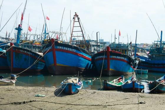 Quảng Ngãi: Hàng trăm tàu cá không thể ra khơi vì luồng lạch bị bồi lấp ảnh 2