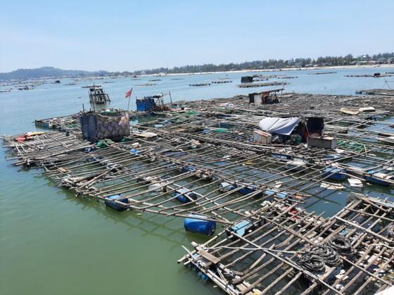 Nuôi trồng thủy sản Quảng Ngãi đối mặt nhiều khó khăn do dịch Covid-19 ảnh 1
