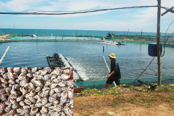 Nuôi trồng thủy sản Quảng Ngãi đối mặt nhiều khó khăn do dịch Covid-19 ảnh 2