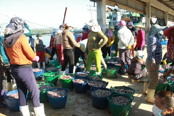 Quảng Ngãi vừa chống dịch vừa đảm bảo hoạt động tại cảng cá ảnh 2
