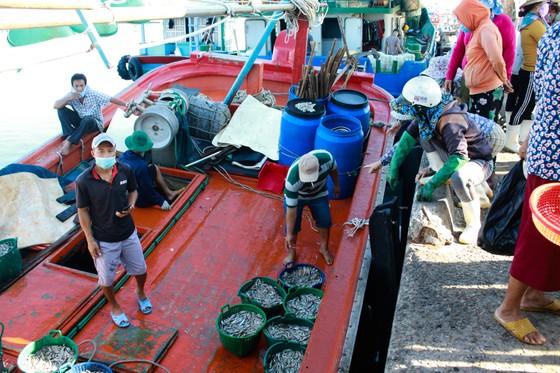 Quảng Ngãi vừa chống dịch vừa đảm bảo hoạt động tại cảng cá ảnh 1