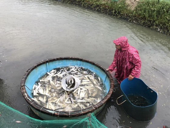 Quảng Ngãi: Cứu hộ tàu cá bị phá nước thả trôi trên biển ảnh 6