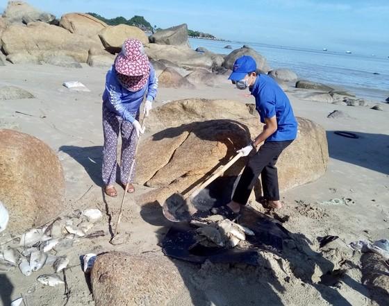Quảng Ngãi: Chôn lấp hơn 5 tấn cá nuôi lồng bè bị chết sau bão số 5 ảnh 4