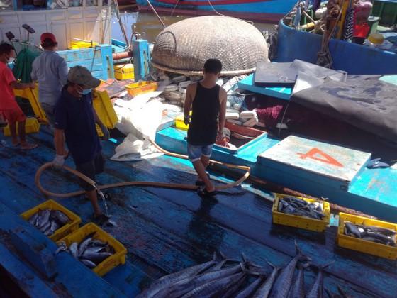 Quảng Ngãi tạm dừng 2 cảng cá, 290 tấn hải sản ứ đọng, đang hư hỏng, bốc mùi ảnh 2