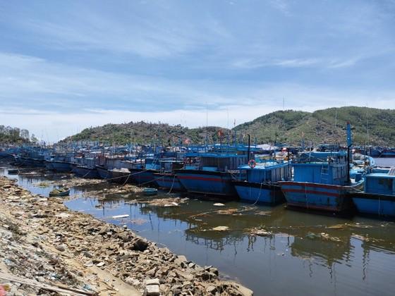 Quảng Ngãi tạm dừng 2 cảng cá, 290 tấn hải sản ứ đọng, đang hư hỏng, bốc mùi ảnh 1