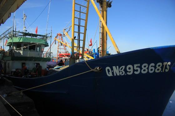 Quảng Ngãi: Nhiều cảng cá mở cửa trở lại, giải quyết hải sản cho ngư dân ảnh 1