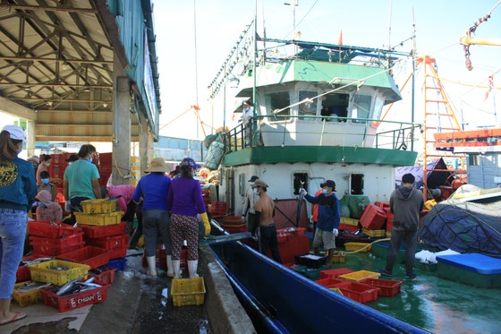 Quảng Ngãi: Nhiều cảng cá mở cửa trở lại, giải quyết hải sản cho ngư dân ảnh 3