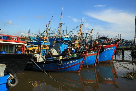 Quảng Ngãi: Nhiều cảng cá mở cửa trở lại, giải quyết hải sản cho ngư dân ảnh 6