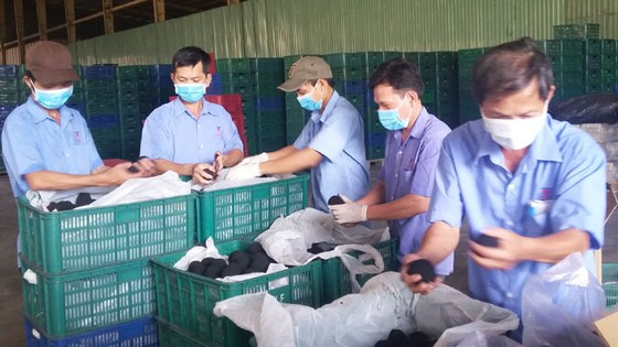 Xuất khẩu trứng vịt muối sang Singapore ảnh 1