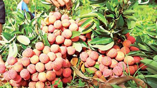 Australia hỗ trợ ngành rau quả nâng cao chất lượng và giá trị ảnh 1