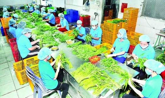 Xuất khẩu nông sản tăng trưởng ấn tượng từ đầu năm  ảnh 1