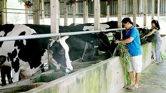 117 tỷ đồng đào tạo nghề nông thôn ảnh 1