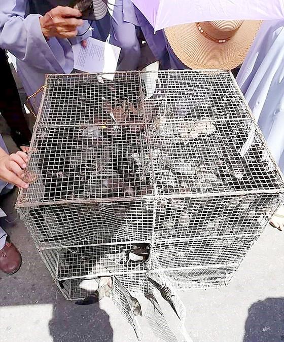 Báo động tình trạng bắt chim yến làm vật phóng sinh ảnh 1