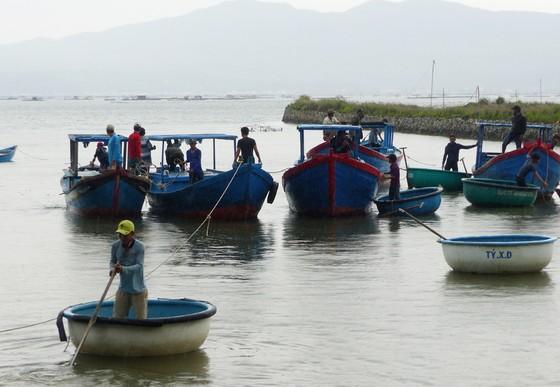 Người nuôi hải sản ở Phú Yên xuất bán tôm hùm trước khi bão số 5 đổ bộ ảnh 4