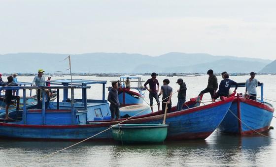 Người nuôi hải sản ở Phú Yên xuất bán tôm hùm trước khi bão số 5 đổ bộ ảnh 6