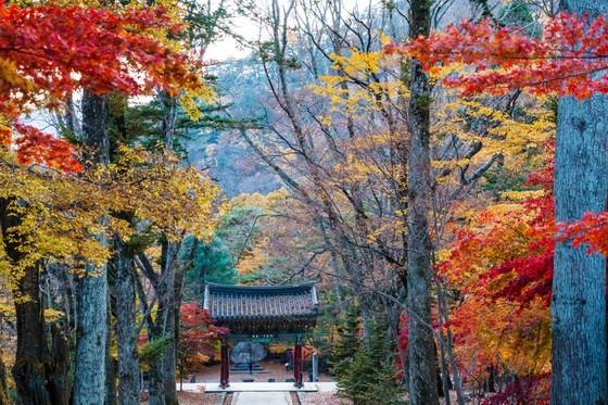 Hàng không tăng chuyến, khách Việt Nam có cơ hội du lịch Hàn Quốc giá rẻ ảnh 1