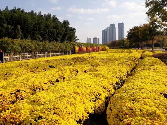 Khám phá những thành phố công nghiệp nổi tiếng ở phía đông nam Hàn Quốc  ảnh 9