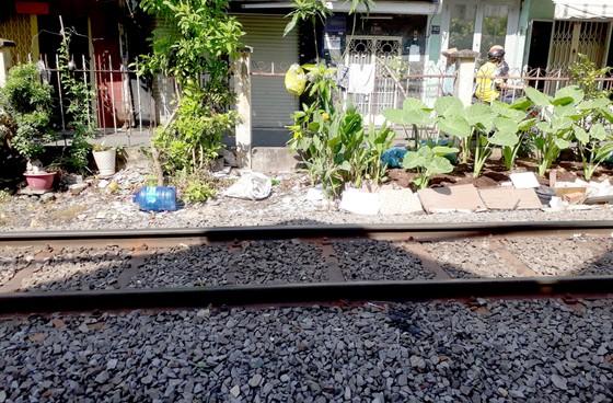 Trồng rau ở hành lang an toàn đường sắt ảnh 1