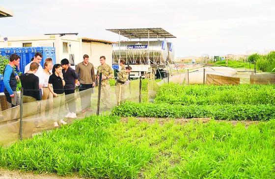 Vườn rau xanh trên cát trắng Nam Sudan ảnh 1