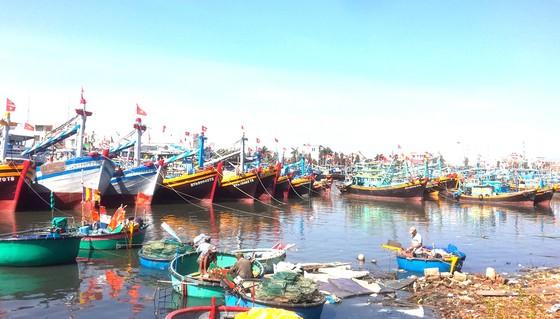 Tàu cá nằm bờ vì thiếu hụt lao động ảnh 1
