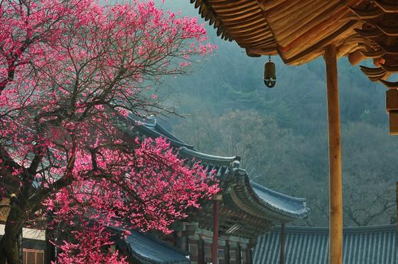KTO tổ chức cuộc thi 'Relive Your Korea Trip' với nhiều giải thưởng hấp dẫn ảnh 2