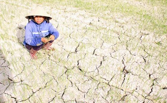 30,2 triệu USD trợ giúp Nam Trung bộ và Tây Nguyên ứng phó biến đổi khí hậu