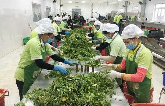 Xuất khẩu nông sản chế biến tăng vọt ảnh 1