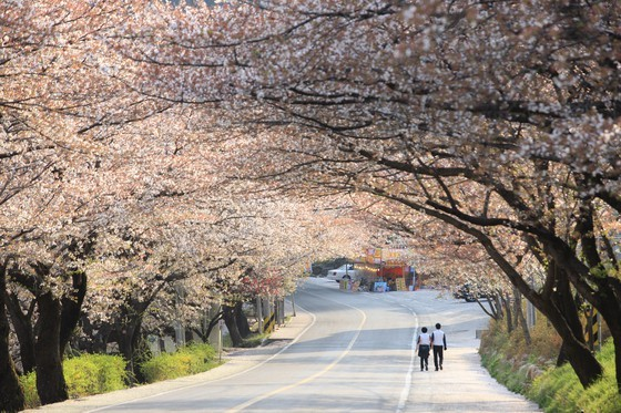 Du lịch Hàn Quốc kỳ vọng sẽ đón khách trở lại vào cuối năm 2020 ảnh 4