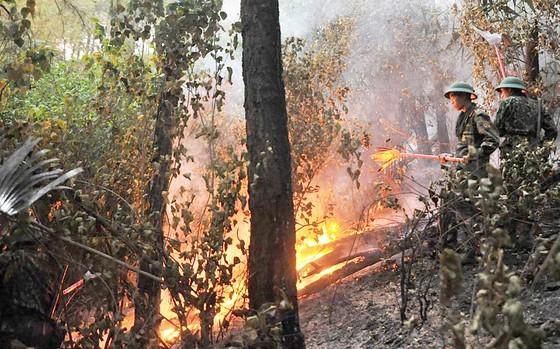 Miền Trung nơm nớp nỗi lo cháy rừng ảnh 1