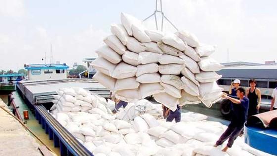 Giá gạo trắng của Việt Nam đang cao nhất thế giới ảnh 1