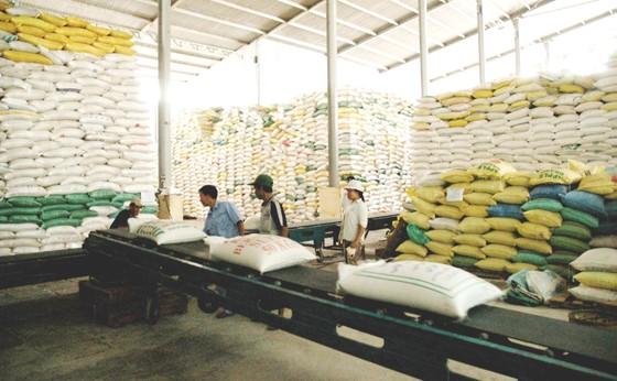 Nhập khẩu gạo giá rẻ tái xuất, ảnh hưởng đến uy tín gạo Việt Nam ảnh 1