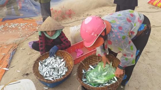 Mùa lưới cá trích ở thành phố biển Vũng Tàu ảnh 5