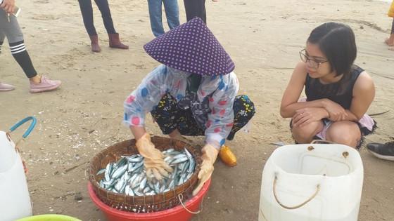 Mùa lưới cá trích ở thành phố biển Vũng Tàu ảnh 6